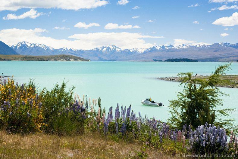 Цветы на озере Текапо, Новая Зеландия (8)