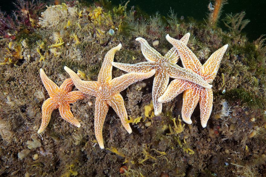 obitateli-podvodnoho-mira (36)