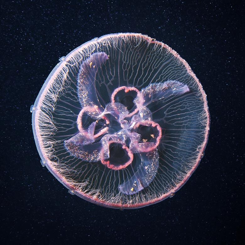 obitateli-podvodnoho-mira (32)