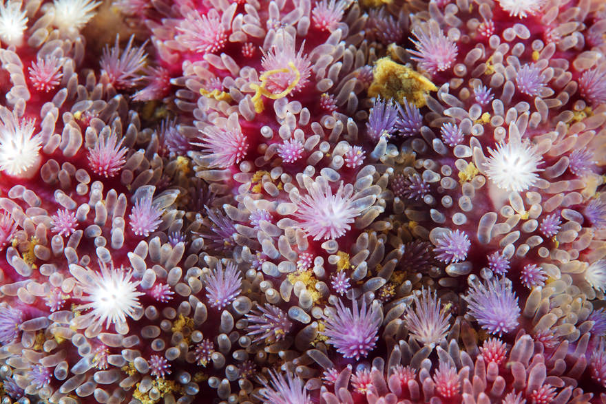 obitateli-podvodnoho-mira (9)