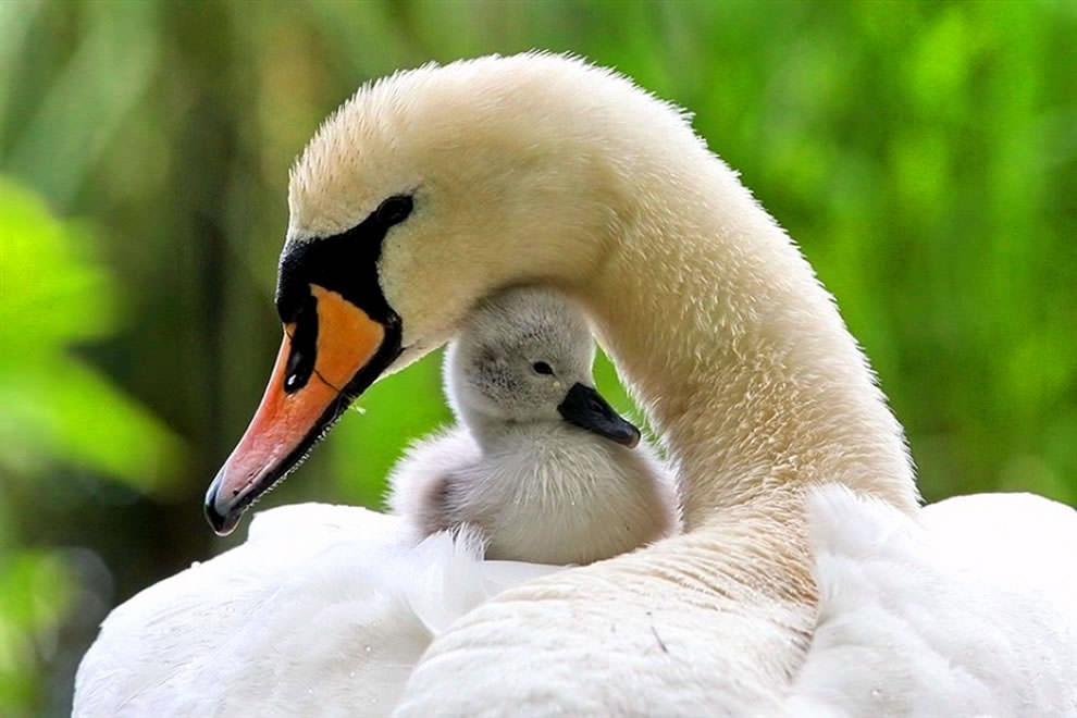 Днем флага, картинки мамы с детьми животные