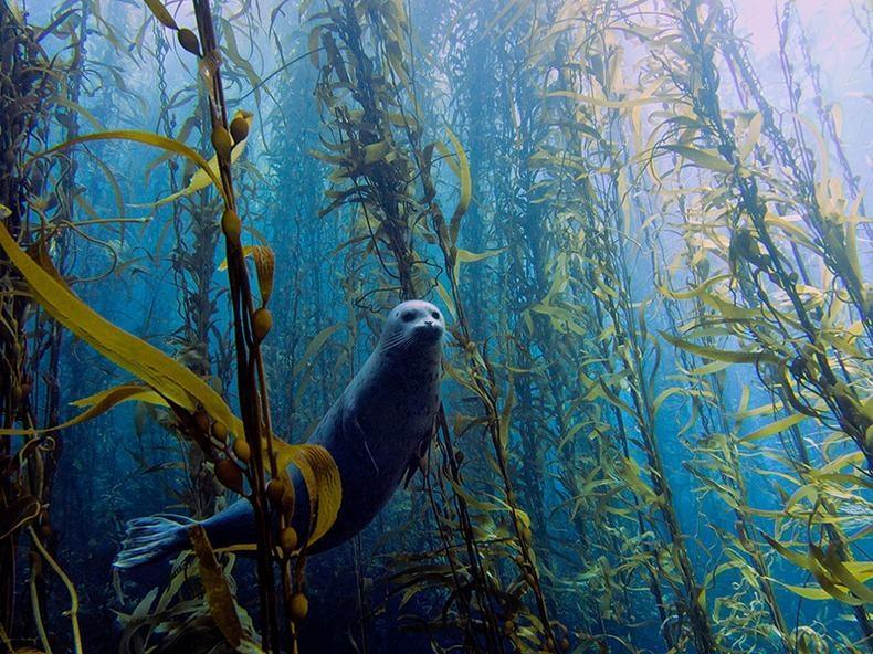 Подводный мир (1)