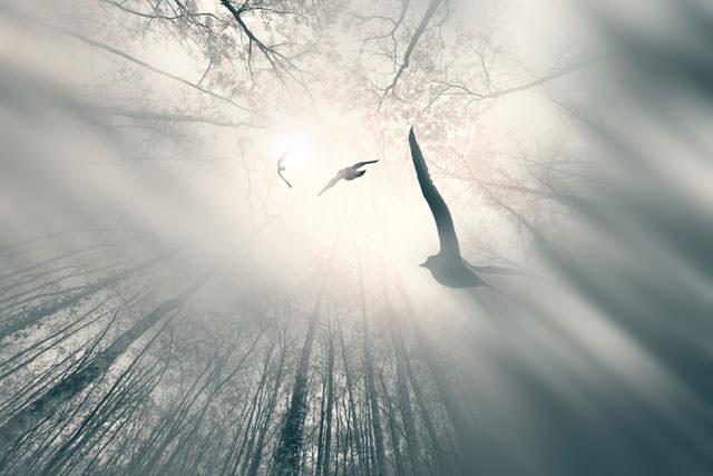 Из жизни птиц (14)
