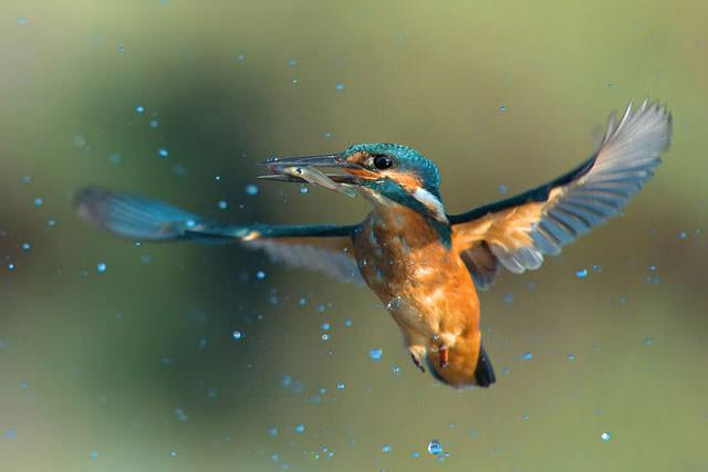 Из жизни птиц (16)