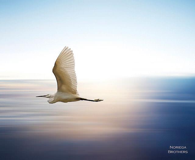 Из жизни птиц (20)