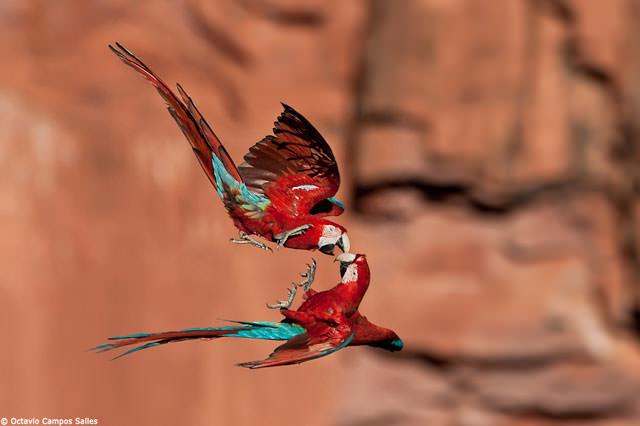 Из жизни птиц (21)
