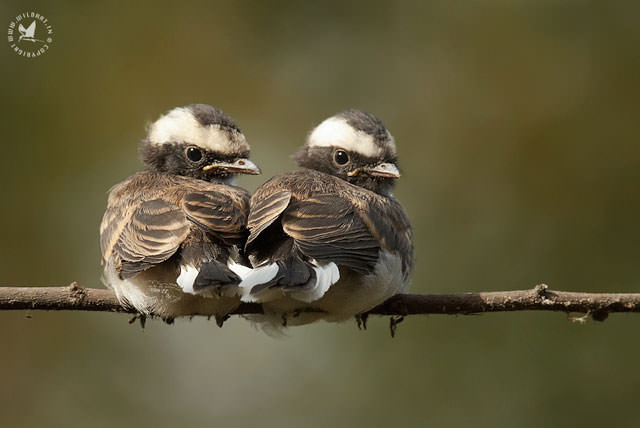 Из жизни птиц (23)