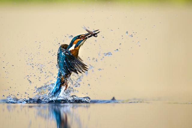 Из жизни птиц (7)