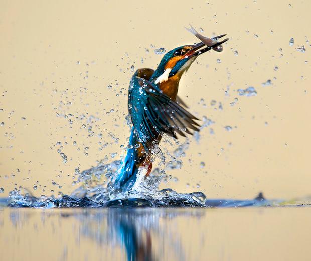 Из жизни птиц (1)