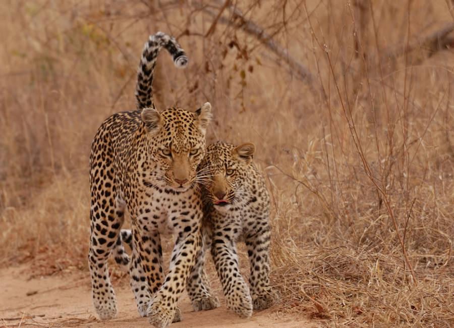 Признания в любви в животном мире (16)