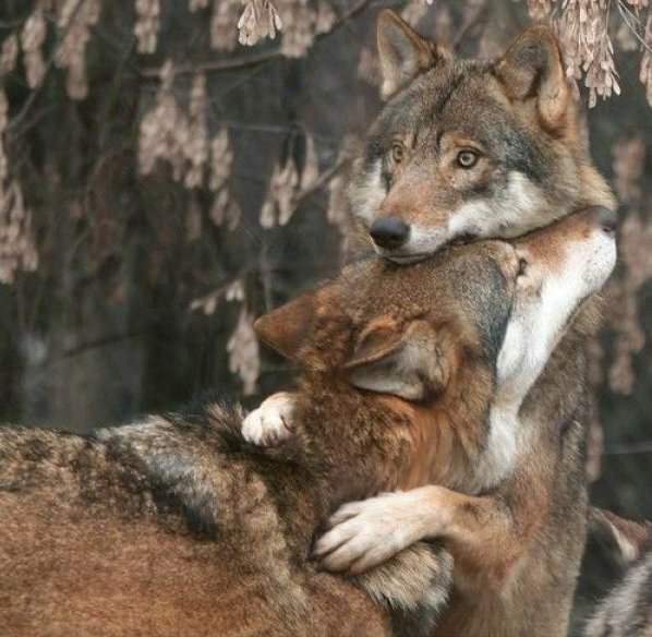 Признания в любви в животном мире (19)