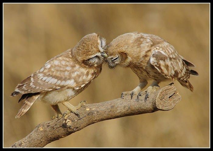 Признания в любви в животном мире (13)