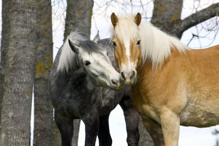 Признания в любви в животном мире (14)