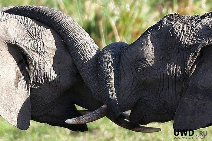 Признания в любви в животном мире (2)