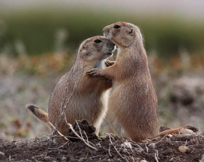 Признания в любви в животном мире (4)