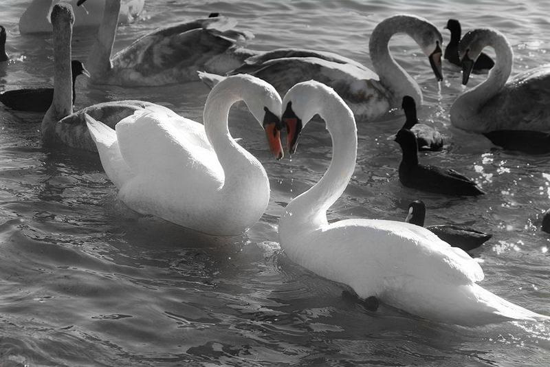 Признания в любви в животном мире (7)