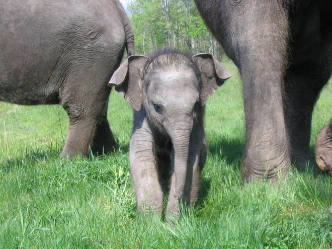 Слоненок (17)