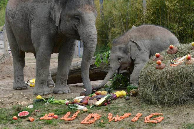 Слоненок (21)