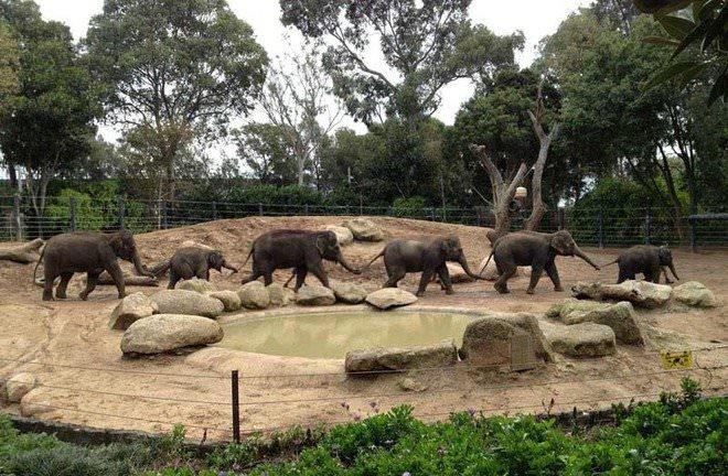 Слоненок (29)