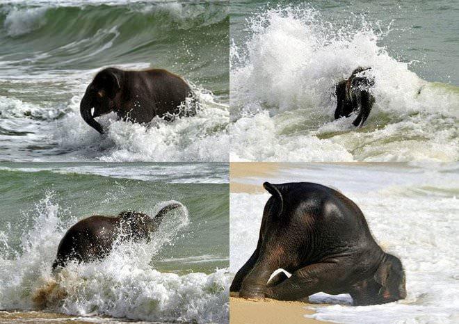 Слоненок (5)