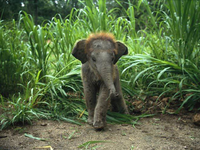 Слоненок (1)