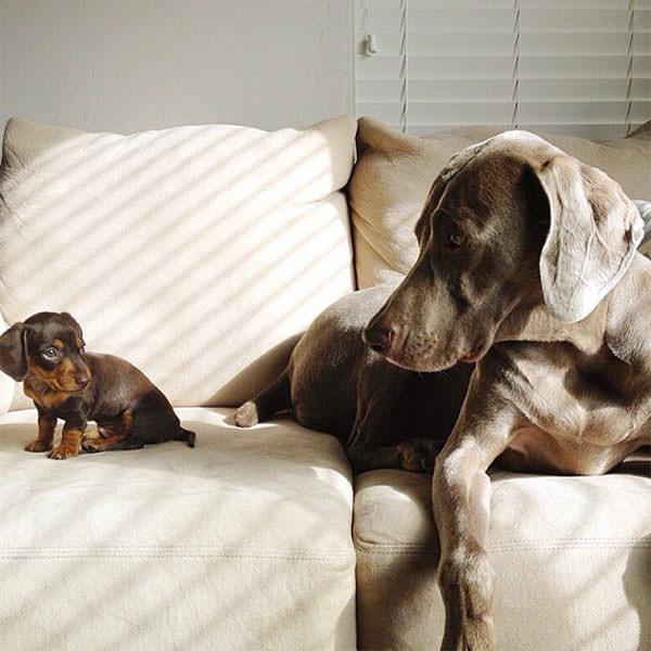Смешные фото собак, что покорили Instagram (12)