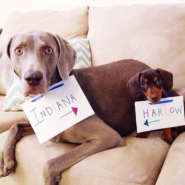 Смешные фото собак, что покорили Instagram (2)