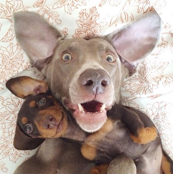 Смешные фото собак, что покорили Instagram (3)