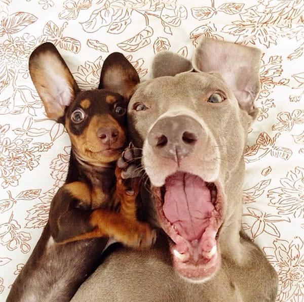 Смешные фото собак, что покорили Instagram (9)