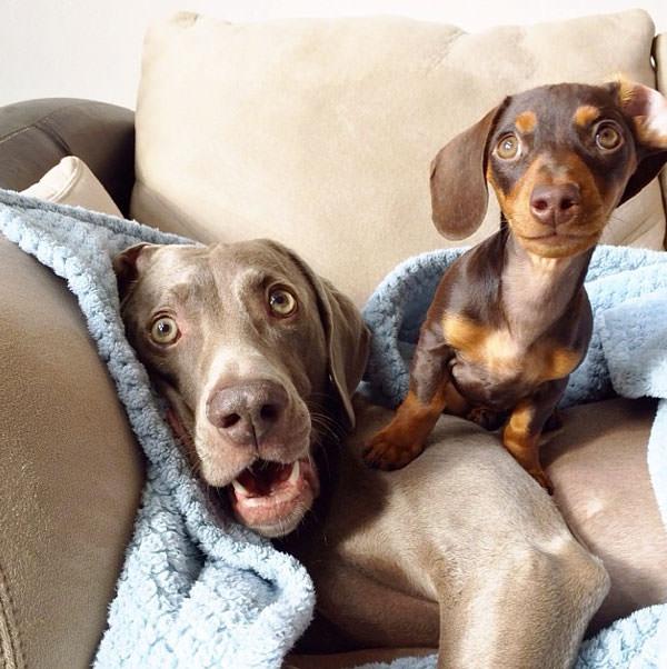 Веселые картинки собак разных пород