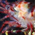 obitateli-podvodnoho-mira (1)
