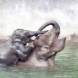 День Матери - фото из мира животных (10)