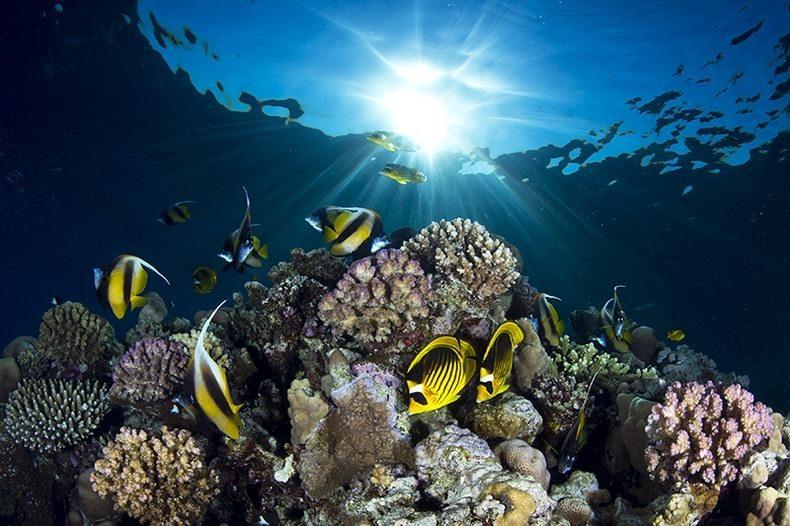Подводный мир (8)
