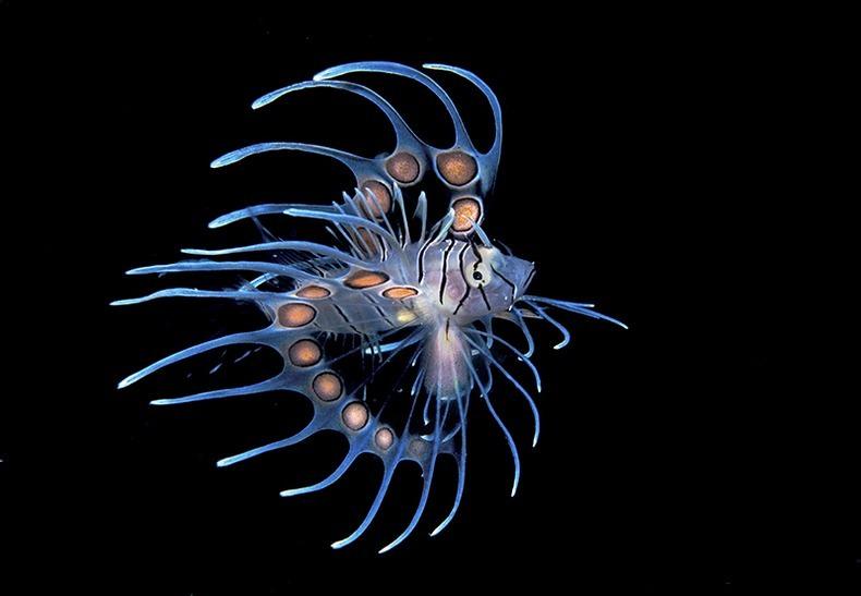 Подводный мир (9)
