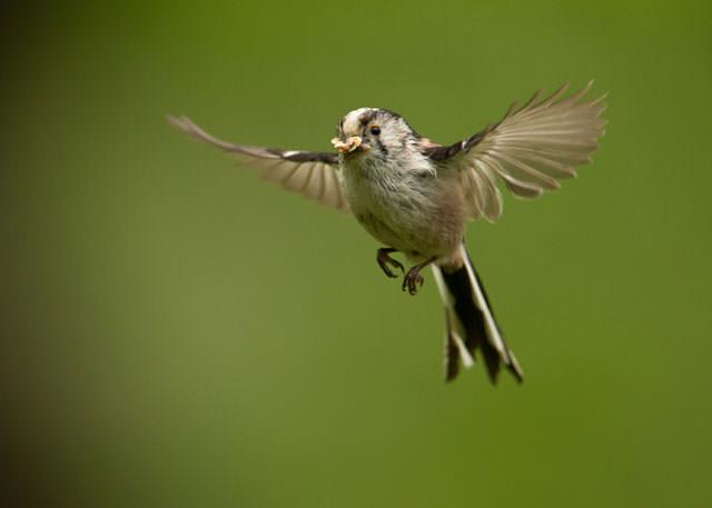 Из жизни птиц (2)