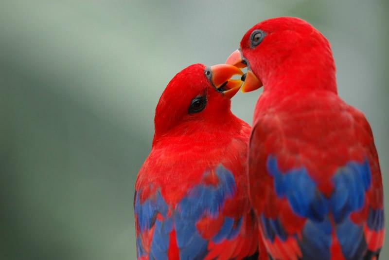 Признания в любви в животном мире (12)