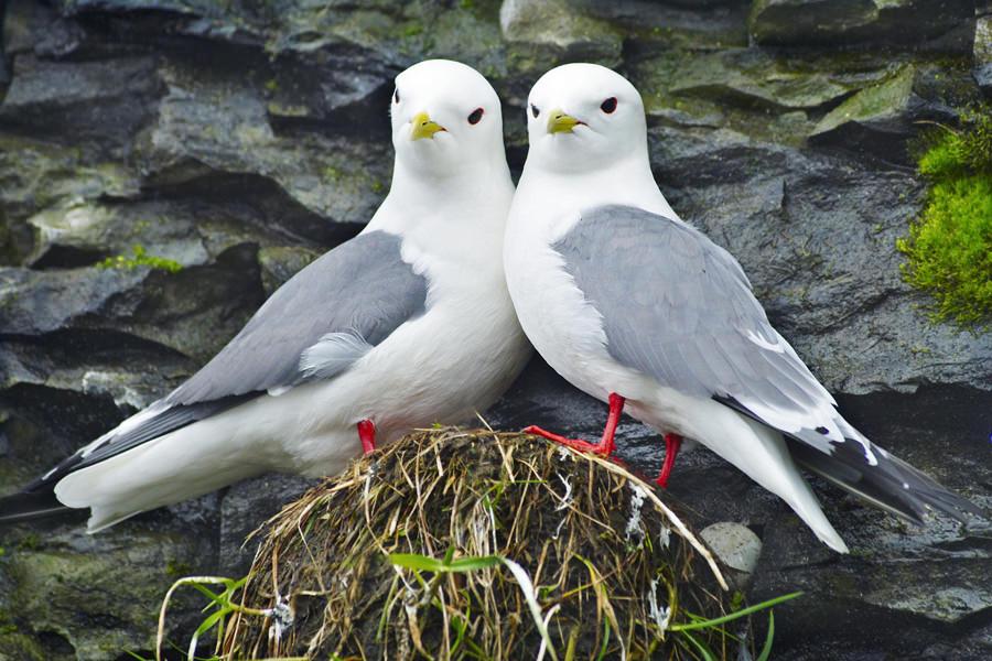 Признания в любви в животном мире (9)