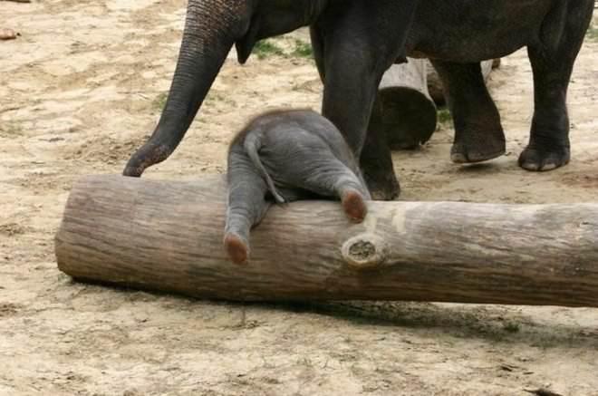 Слоненок (16)