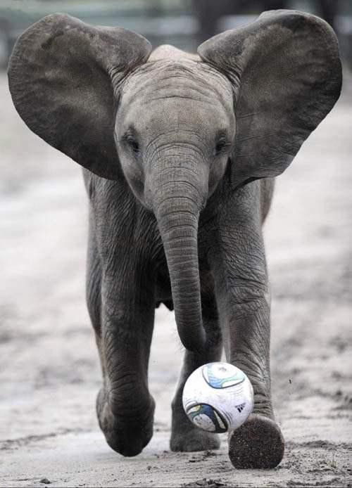 Слоненок (18)
