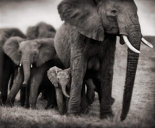 Слоненок (19)