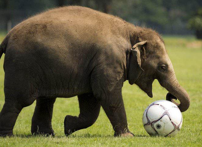 Слоненок (2)