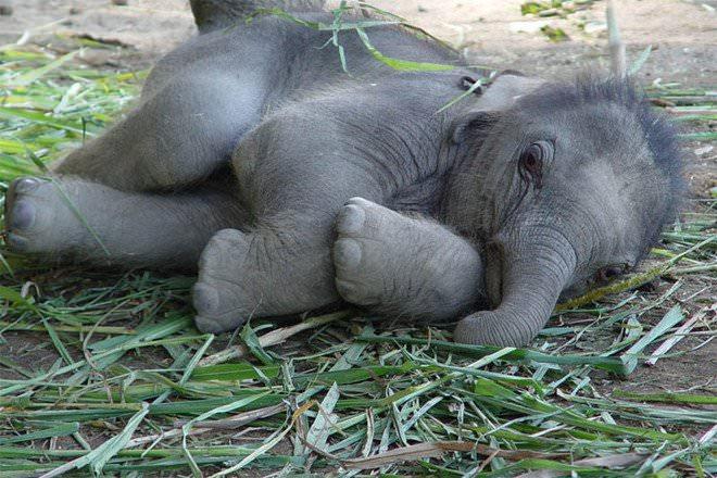 Слоненок (22)