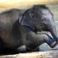 Слоненок (27)