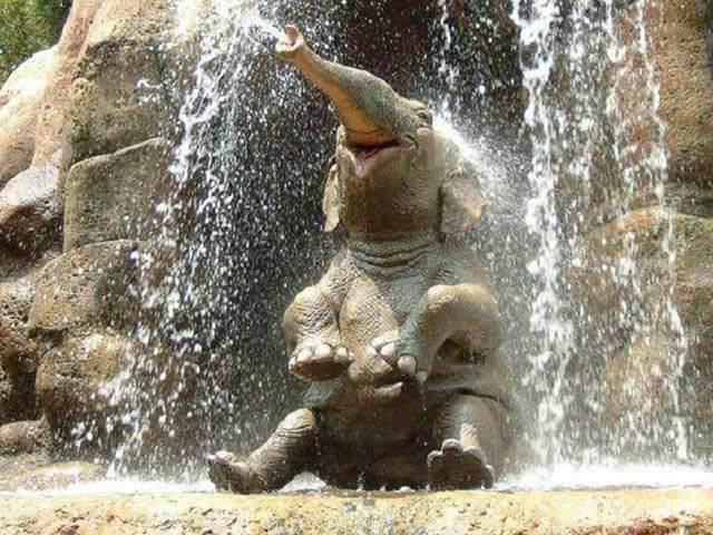 Слоненок (3)