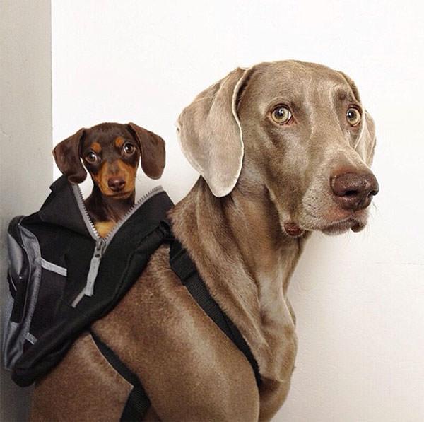 Смешные фото собак, что покорили Instagram (11)