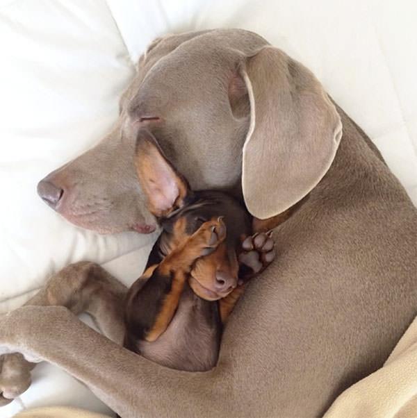 Смешные фото собак, что покорили Instagram (7)