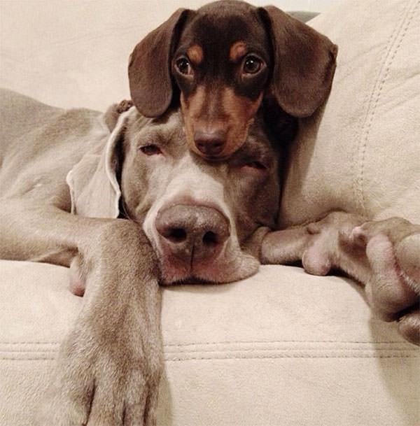Смешные фото собак, что покорили Instagram (8)
