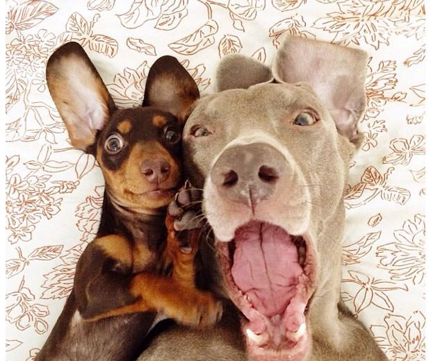 Смешные фото собак, что покорили Instagram (1)